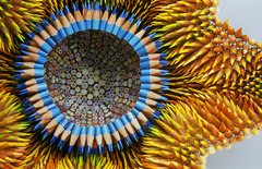 Jennifer Maestre: pencil sculpture