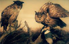 Katrin Huth - Natural History